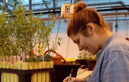 greenhouse jules